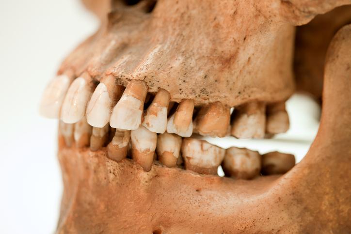 archaeological teeth