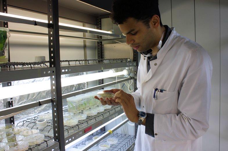 Botanische Forschung an der Universität Hamburg
